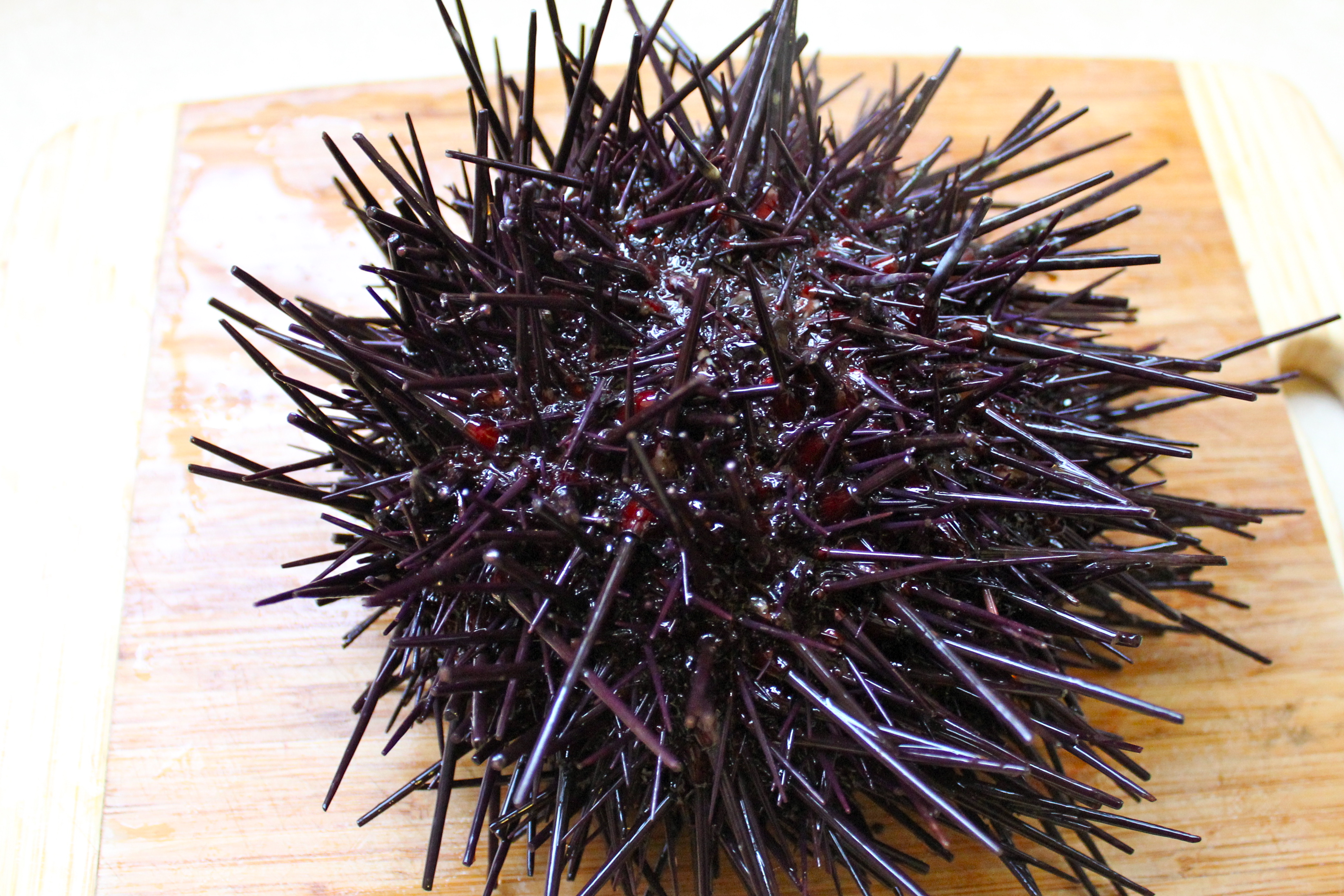 how to catch a sea urchin